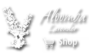 Click to return to Aloomba Lavender homepage